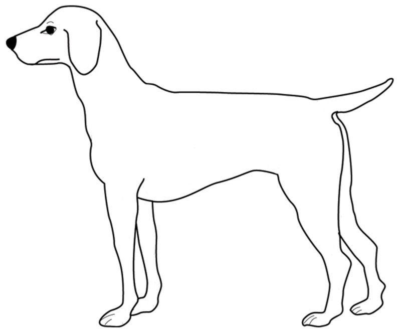 Coloriage annimaux domestique - Coloriage labrador ...