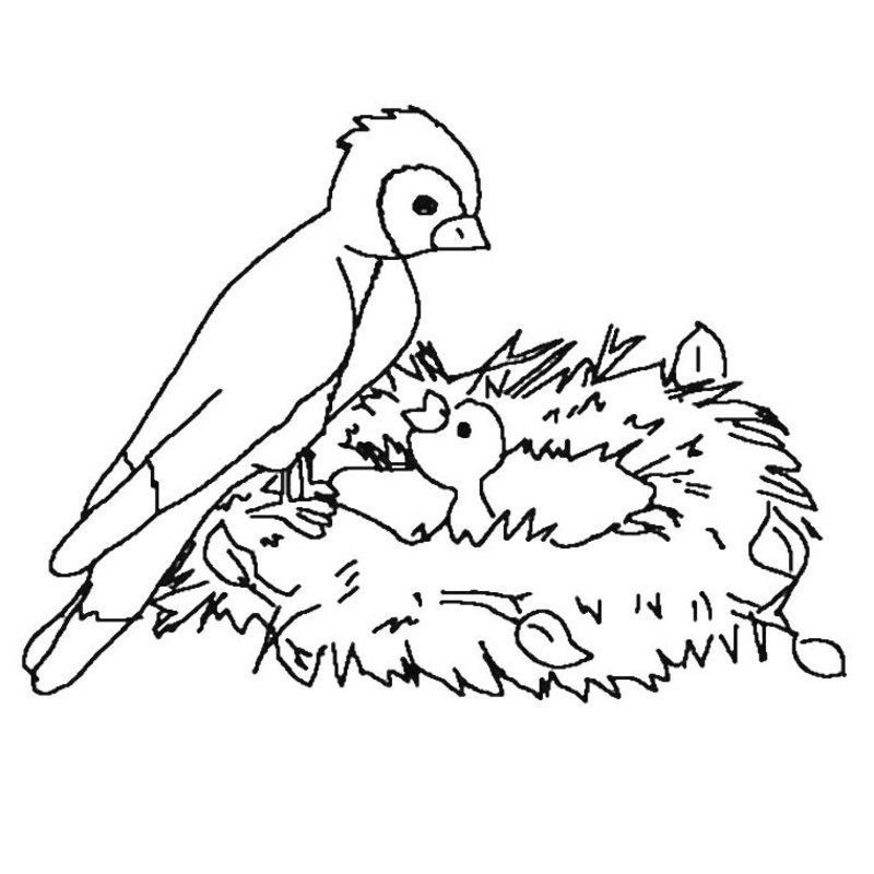 Coloriage Oiseau Sur Arbre.Coloriage Printemps