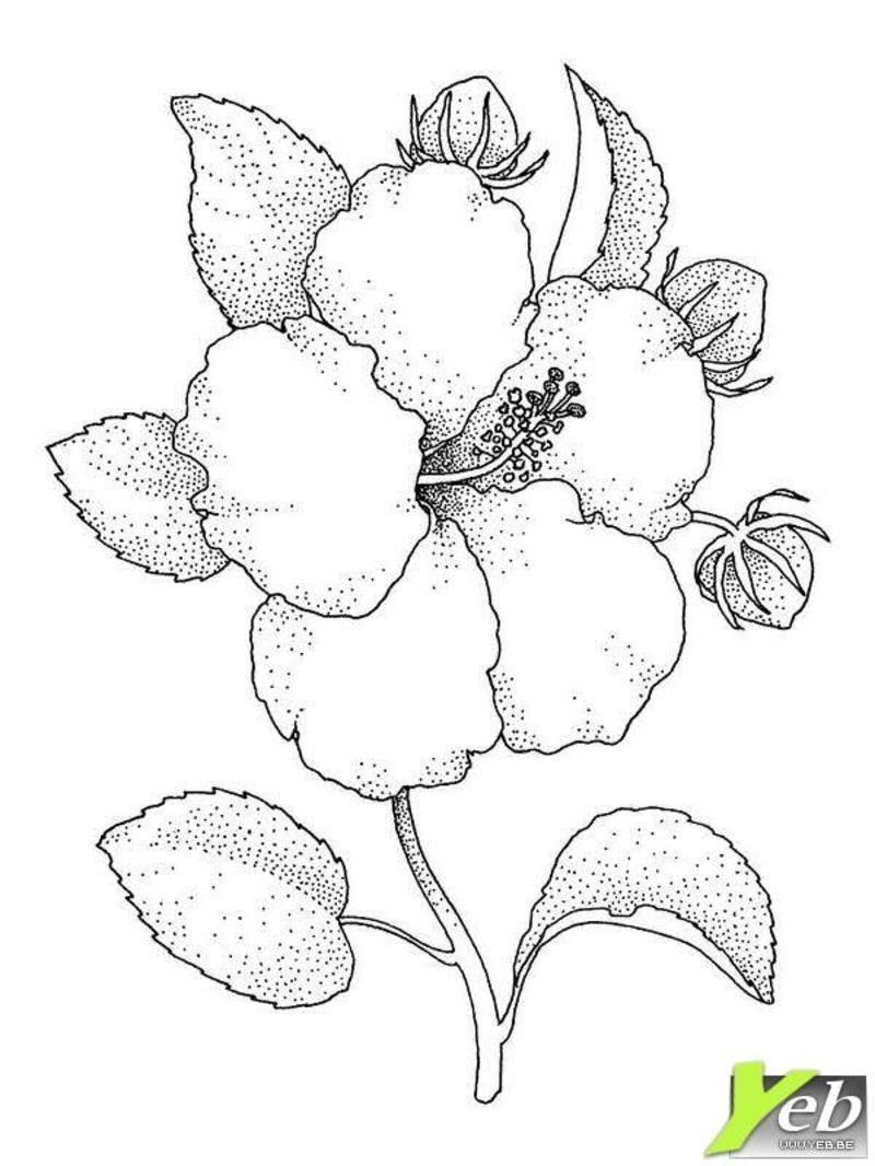 coloriage une fleur speciale maman