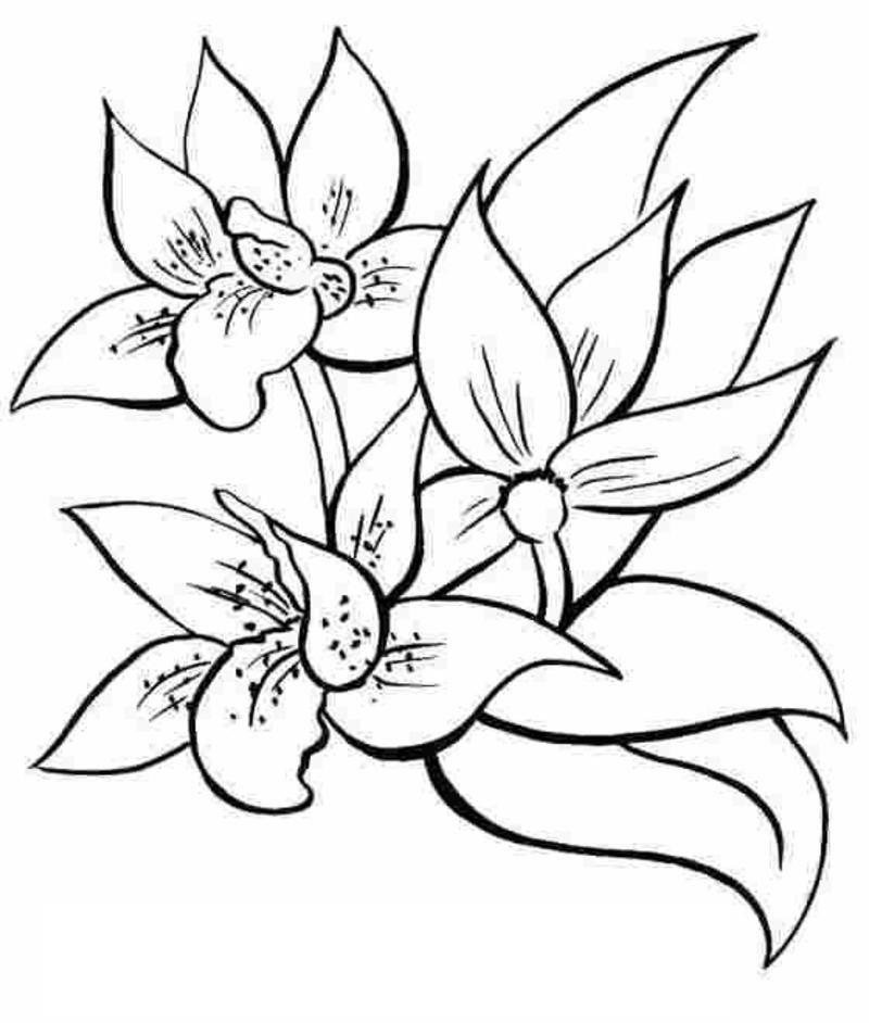Coloriage fleur et plante - Photo de fleur a imprimer ...