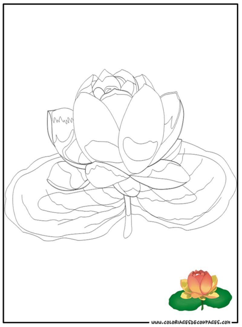 Coloriage fleur et plante - Coloriage fleur 8 petales ...